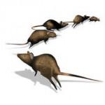 rats4