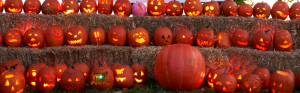 pumpkins many