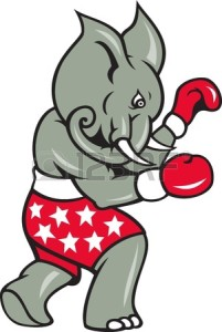 elephant boxing shorts
